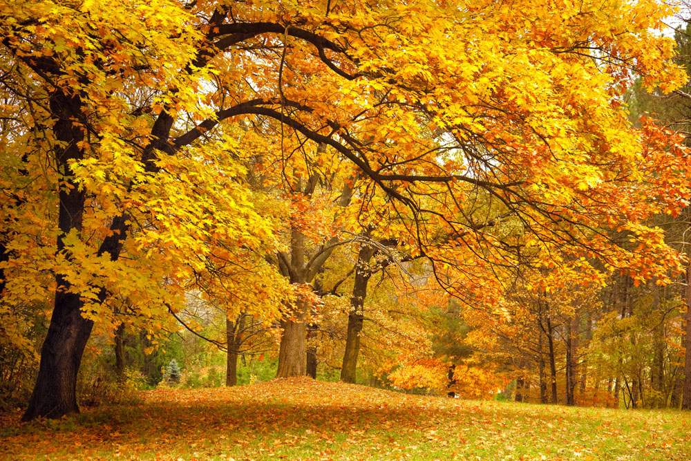 4 Reasons to Love Fall at Redmond Dental Group